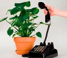 le piante che parlano