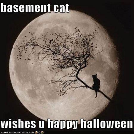 basement cat halloween