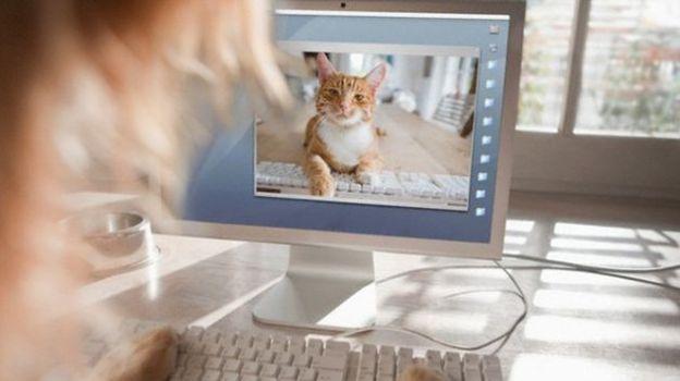 uso facebook social network animali