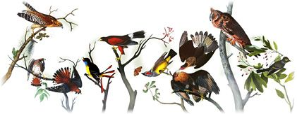 Google Doodle per celebrare il 226° anniversario della nascita di John James Audubon