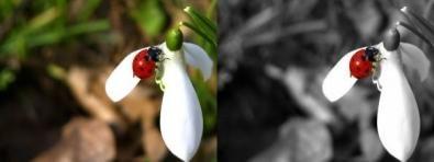 Come Creare Foto In Bianco E Nero Con Un Particolare Colorato Con