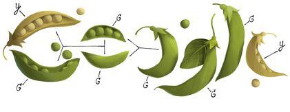 Il Google Doodle di oggi ricorda il biologo Gregor Mendel