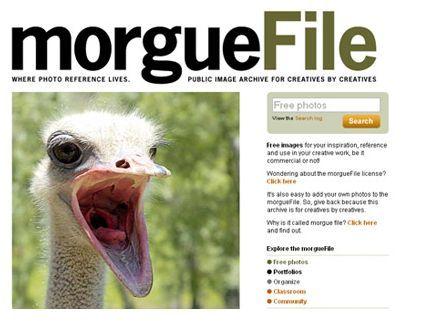immagini morguefile