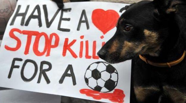 Pagine su Facebook contro la strage di cani in Ucraina: boicottiamo gli Europei 2012?
