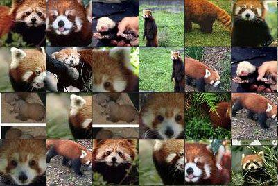 panda rossi ovunque