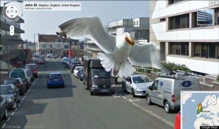 Google Street View: Photobombing di un gabbiano