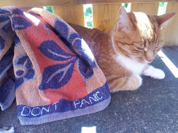 Towel Day: un gatto con l'asciugamano
