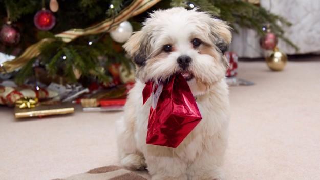 Cane con un regalo di Natale