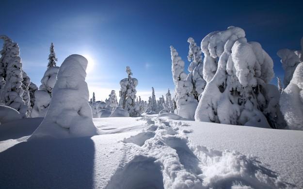 Alberi pieni di neve