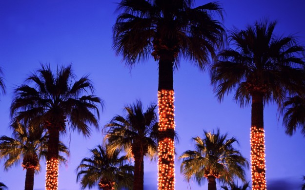 Palme illuminate